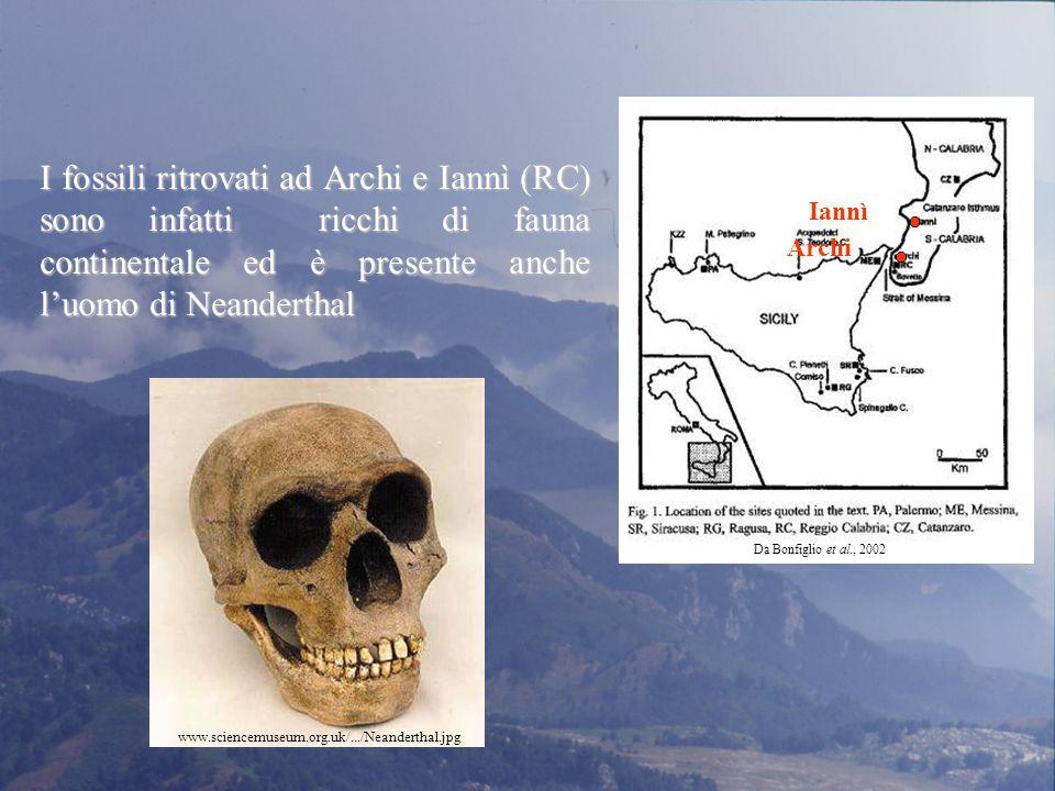 I fossili ritrovati ad Archi e Iannì (RC) sono infatti ricchi di fauna continentale ed è presente anche l'uomo di Neanderthal www.sciencemuseum.org.uk/.../Neanderthal.jpg Archi Iannì Da Bonfiglio et al., 2002