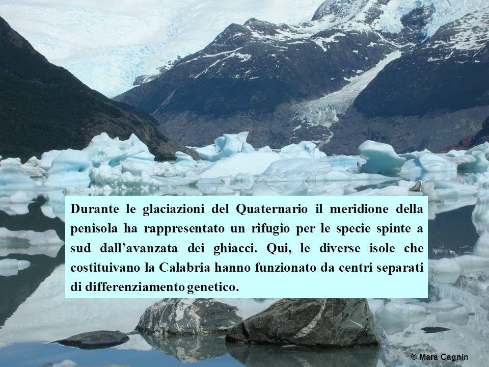 Durante le glaciazioni del Quaternario il meridione della penisola ha rappresentato un rifugio per le specie spinte a sud dall'avanzata dei ghiacci.
