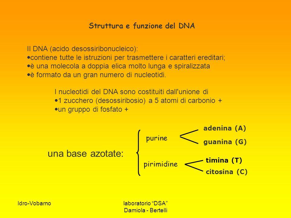 """Idro-Vobarnolaboratorio """"DSA"""" Damiola - Bertelli citosina (C) guanina (G) adenina (A) Il DNA (acido desossiribonucleico):  contiene tutte le istruzio"""