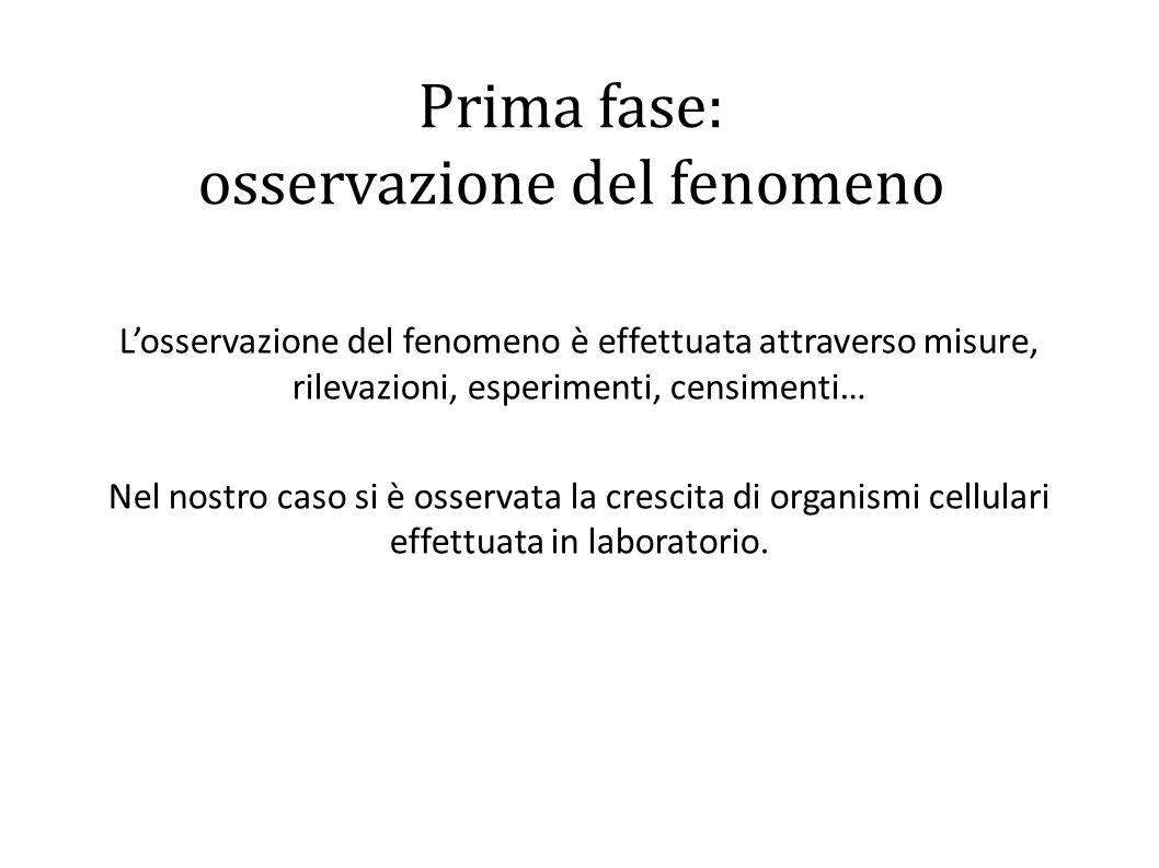Prima fase: osservazione del fenomeno L'osservazione del fenomeno è effettuata attraverso misure, rilevazioni, esperimenti, censimenti… Nel nostro caso si è osservata la crescita di organismi cellulari effettuata in laboratorio.