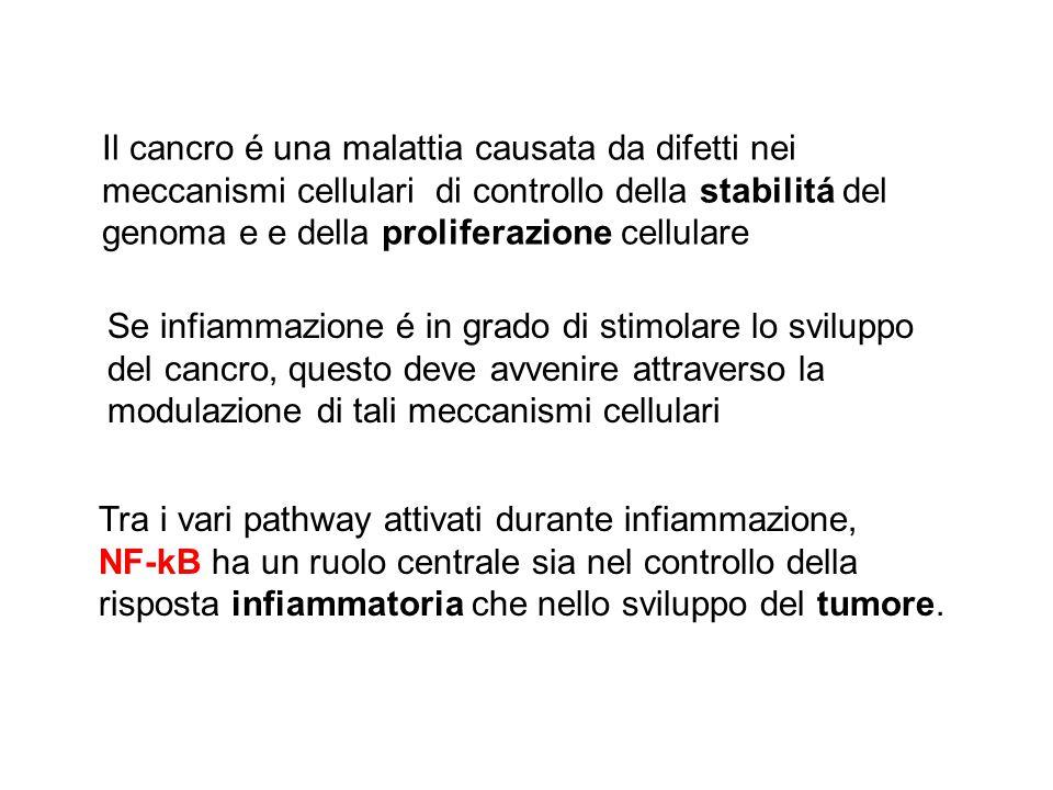 Se infiammazione é in grado di stimolare lo sviluppo del cancro, questo deve avvenire attraverso la modulazione di tali meccanismi cellulari Tra i var
