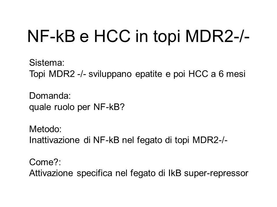 NF-kB e HCC in topi MDR2-/- Sistema: Topi MDR2 -/- sviluppano epatite e poi HCC a 6 mesi Domanda: quale ruolo per NF-kB? Metodo: Inattivazione di NF-k