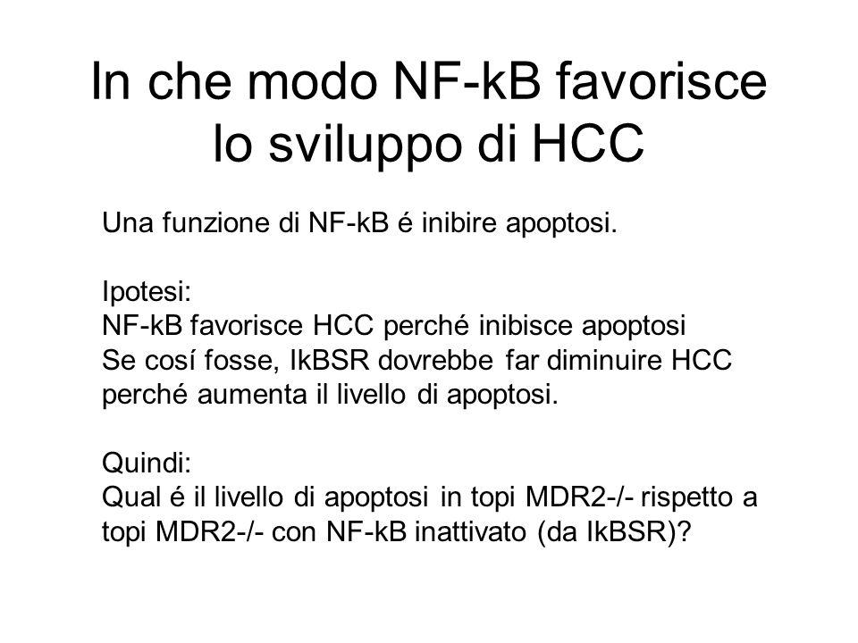 In che modo NF-kB favorisce lo sviluppo di HCC Una funzione di NF-kB é inibire apoptosi. Ipotesi: NF-kB favorisce HCC perché inibisce apoptosi Se cosí