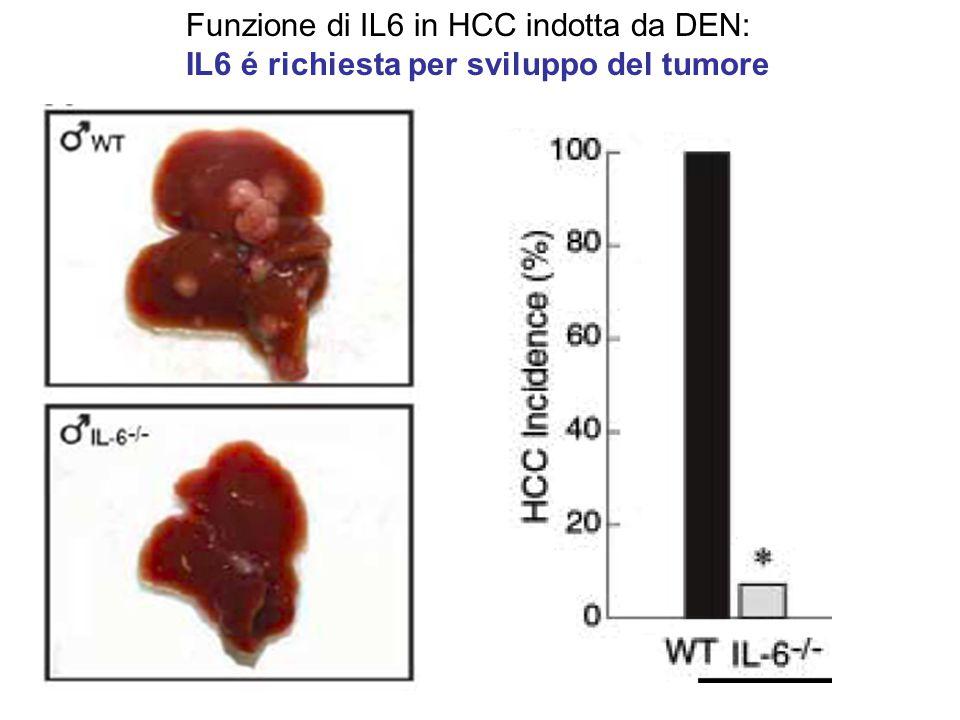 Funzione di IL6 in HCC indotta da DEN: IL6 é richiesta per sviluppo del tumore