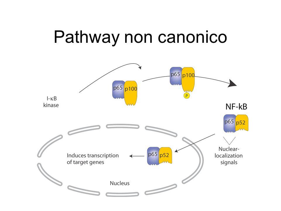 Infiammazione - tumore Colangite Infiammazione vie biliari Hepatocellular carcinoma