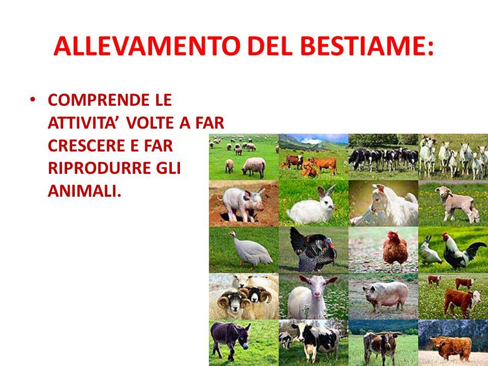 ALLEVAMENTO DEL BESTIAME: COMPRENDE LE ATTIVITA' VOLTE A FAR CRESCERE E FAR RIPRODURRE GLI ANIMALI.