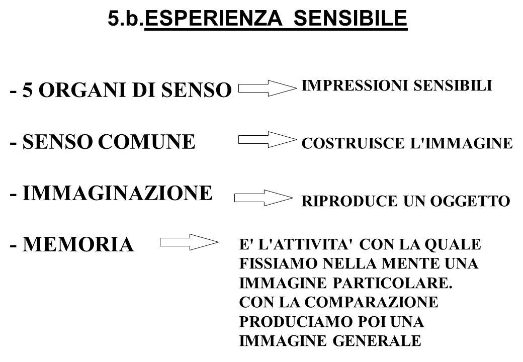5.b.ESPERIENZA SENSIBILE - 5 ORGANI DI SENSO - SENSO COMUNE - IMMAGINAZIONE - MEMORIA IMPRESSIONI SENSIBILI COSTRUISCE L'IMMAGINE RIPRODUCE UN OGGETTO