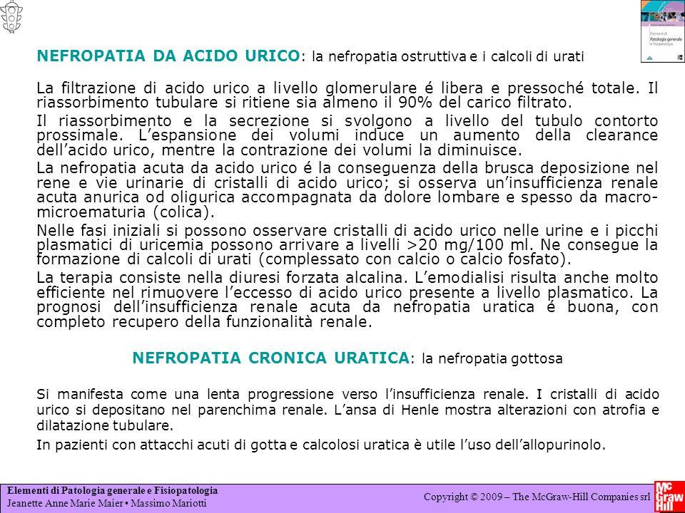 Elementi di Patologia generale e Fisiopatologia Jeanette Anne Marie Maier Massimo Mariotti Copyright © 2009 – The McGraw-Hill Companies srl NEFROPATIA