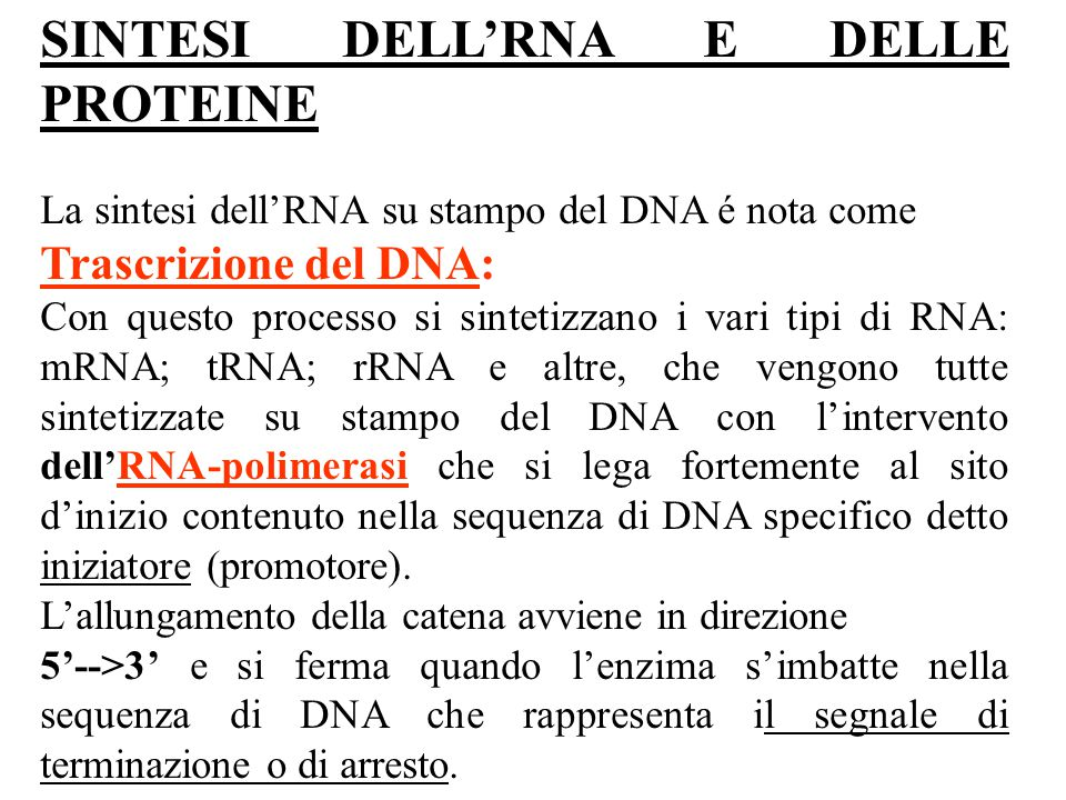 SINTESI DELL'RNA E DELLE PROTEINE La sintesi dell'RNA su stampo del DNA é nota come Trascrizione del DNA: Con questo processo si sintetizzano i vari t