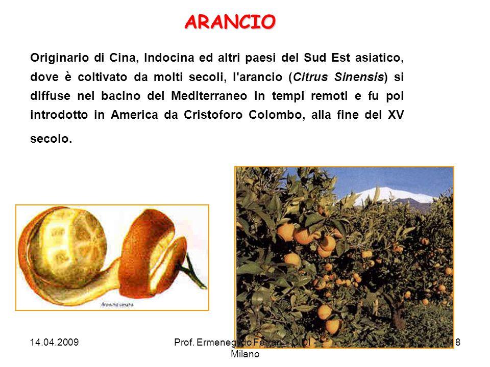 Originario di Cina, Indocina ed altri paesi del Sud Est asiatico, dove è coltivato da molti secoli, l'arancio (Citrus Sinensis) si diffuse nel bacino