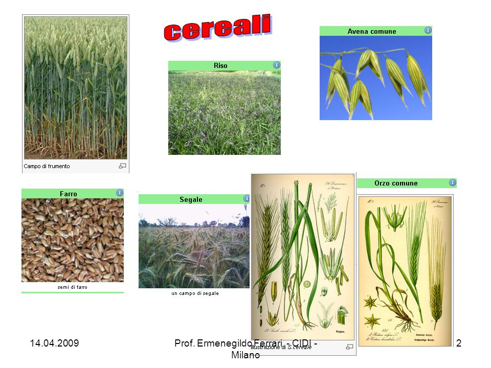 Vi sono tracce del consumo dell'avena fin dal 4000 a.C., ma si trattava della pianta selvatica, raccolta e consumata nelle pianure dell'Asia centrale e dell'Europa centro-settentrionale.