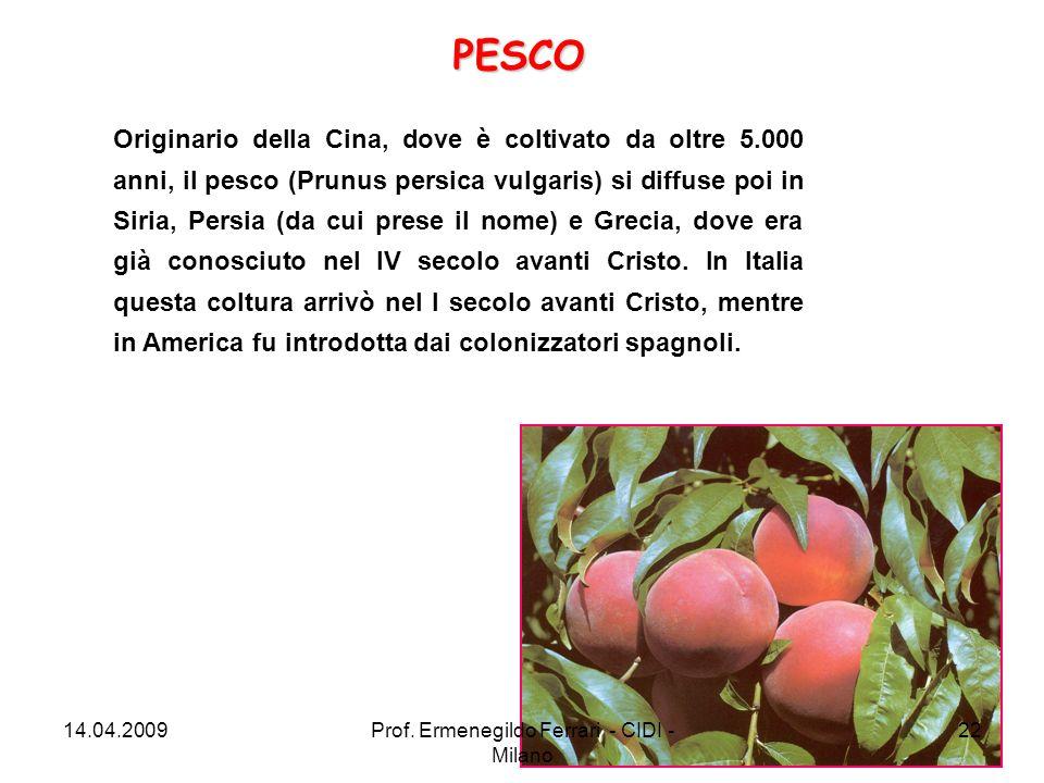 Originario della Cina, dove è coltivato da oltre 5.000 anni, il pesco (Prunus persica vulgaris) si diffuse poi in Siria, Persia (da cui prese il nome)