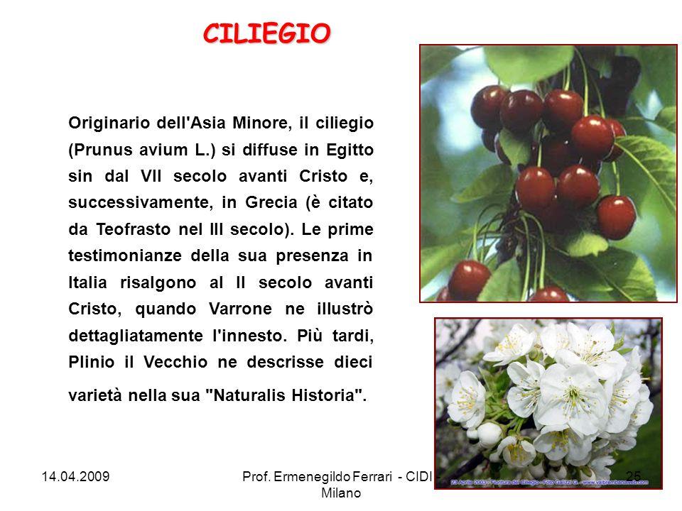 Originario dell'Asia Minore, il ciliegio (Prunus avium L.) si diffuse in Egitto sin dal VII secolo avanti Cristo e, successivamente, in Grecia (è cita