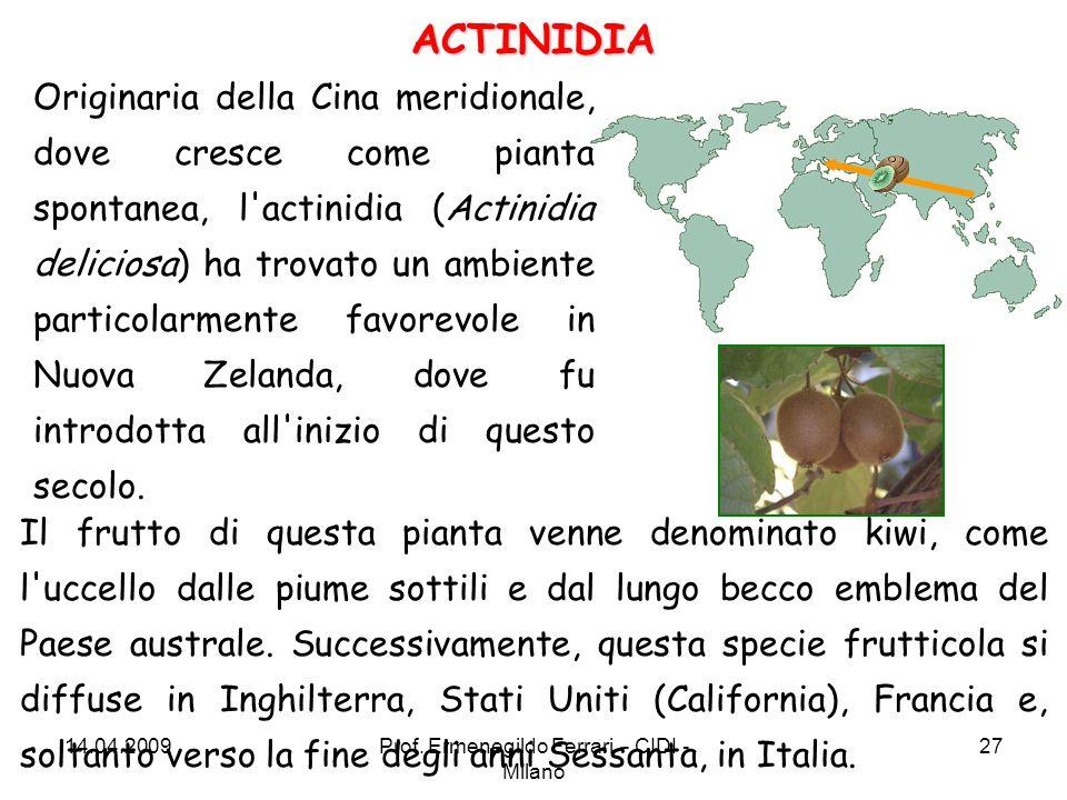 Originaria della Cina meridionale, dove cresce come pianta spontanea, l'actinidia (Actinidia deliciosa) ha trovato un ambiente particolarmente favorev