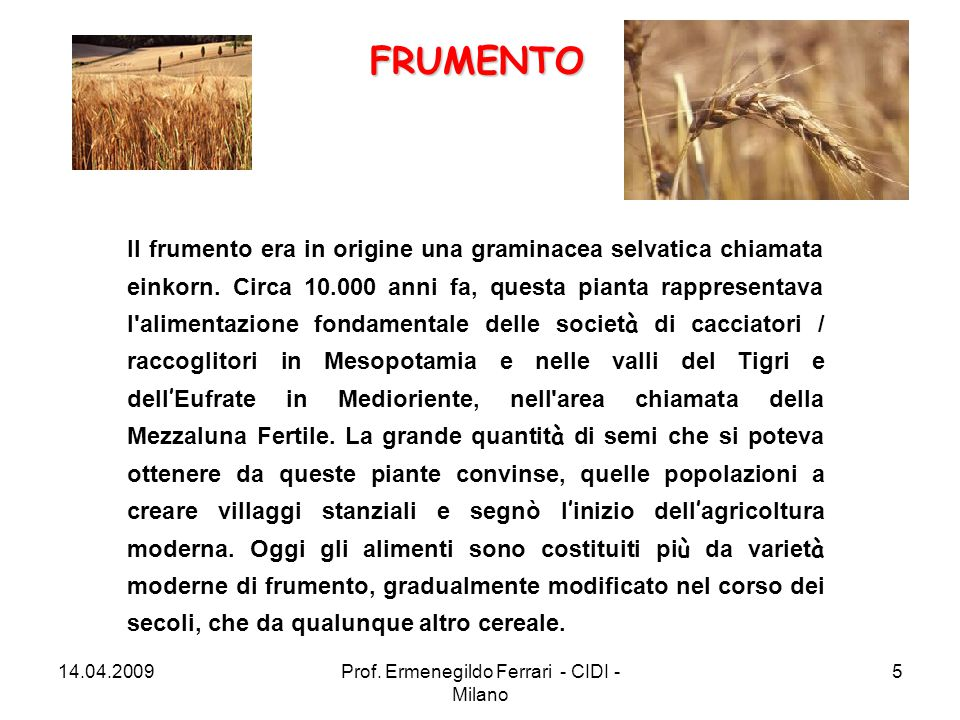 Il frumento era in origine una graminacea selvatica chiamata einkorn. Circa 10.000 anni fa, questa pianta rappresentava l'alimentazione fondamentale d