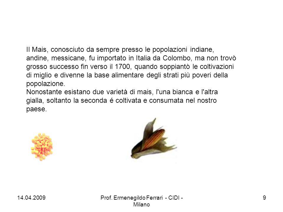 Il Mais, conosciuto da sempre presso le popolazioni indiane, andine, messicane, fu importato in Italia da Colombo, ma non trovò grosso successo fin ve