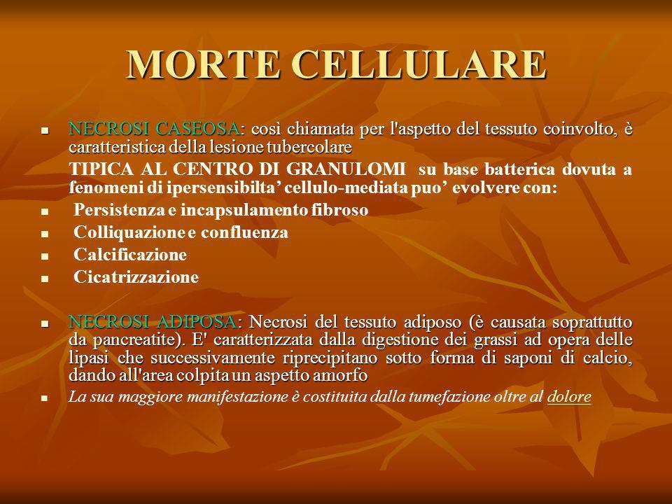 MORTE CELLULARE NECROSI CASEOSA: così chiamata per l'aspetto del tessuto coinvolto, è caratteristica della lesione tubercolare NECROSI CASEOSA: così c