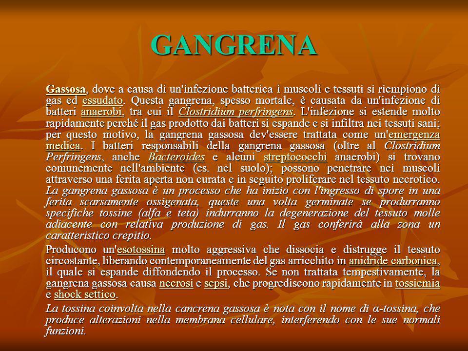 GANGRENA GassosaGassosa, dove a causa di un'infezione batterica i muscoli e tessuti si riempiono di gas ed essudato. Questa gangrena, spesso mortale,