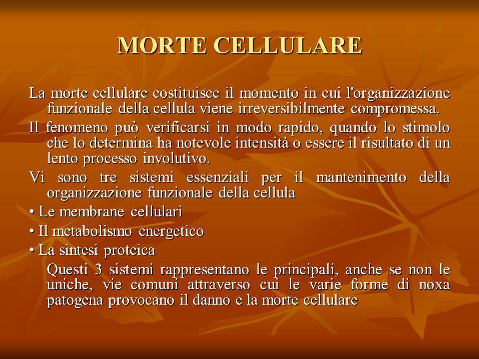 MORTE CELLULARE La morte cellulare costituisce il momento in cui l'organizzazione funzionale della cellula viene irreversibilmente compromessa. Il fen