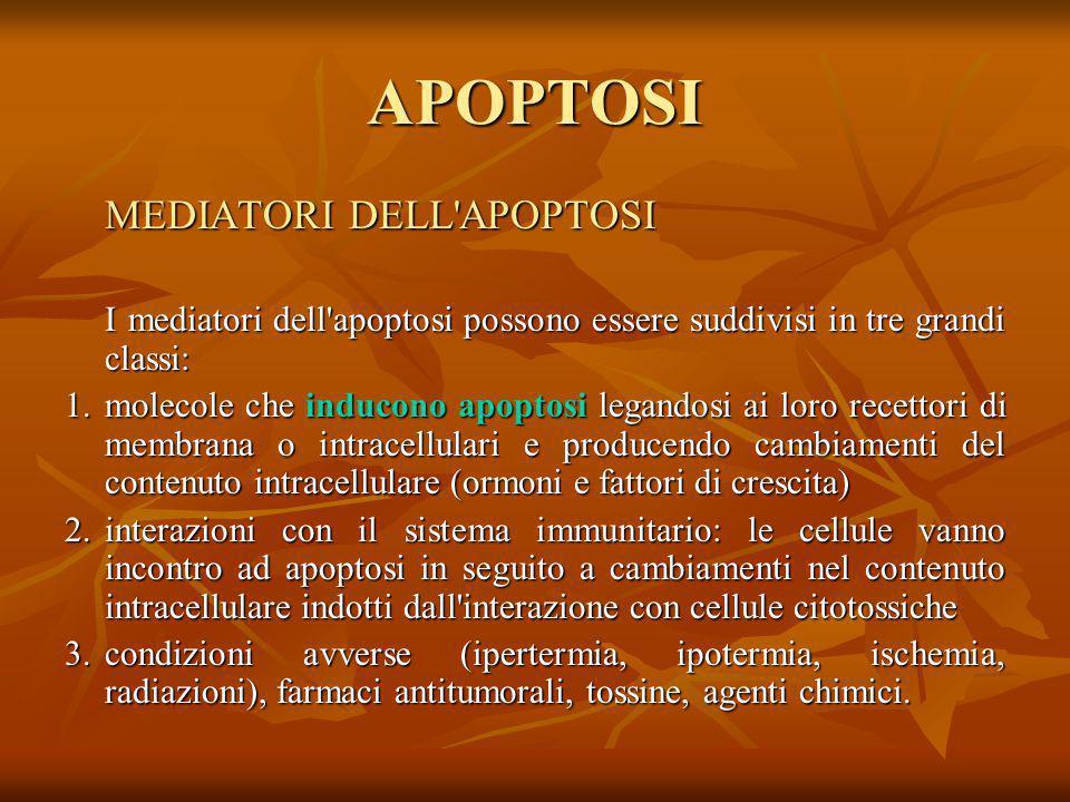 APOPTOSI MEDIATORI DELL'APOPTOSI I mediatori dell'apoptosi possono essere suddivisi in tre grandi classi: 1.molecole che inducono apoptosi legandosi a
