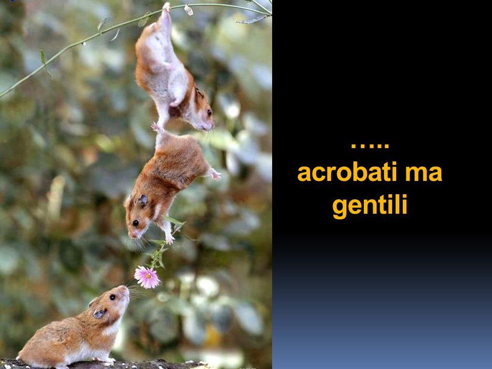 ….. acrobati ma gentili