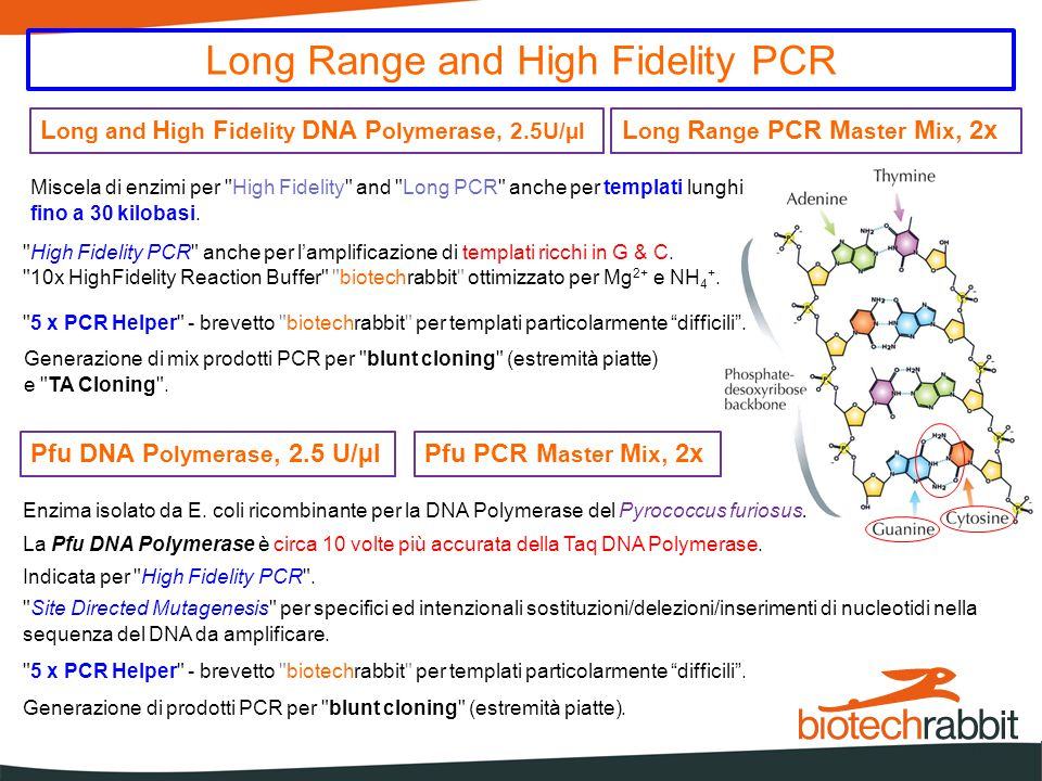 Long Range and High Fidelity PCR L ong and H igh F idelity DNA P olymerase, 2.5U/µl L ong R ange PCR M aster M ix, 2x Miscela di enzimi per