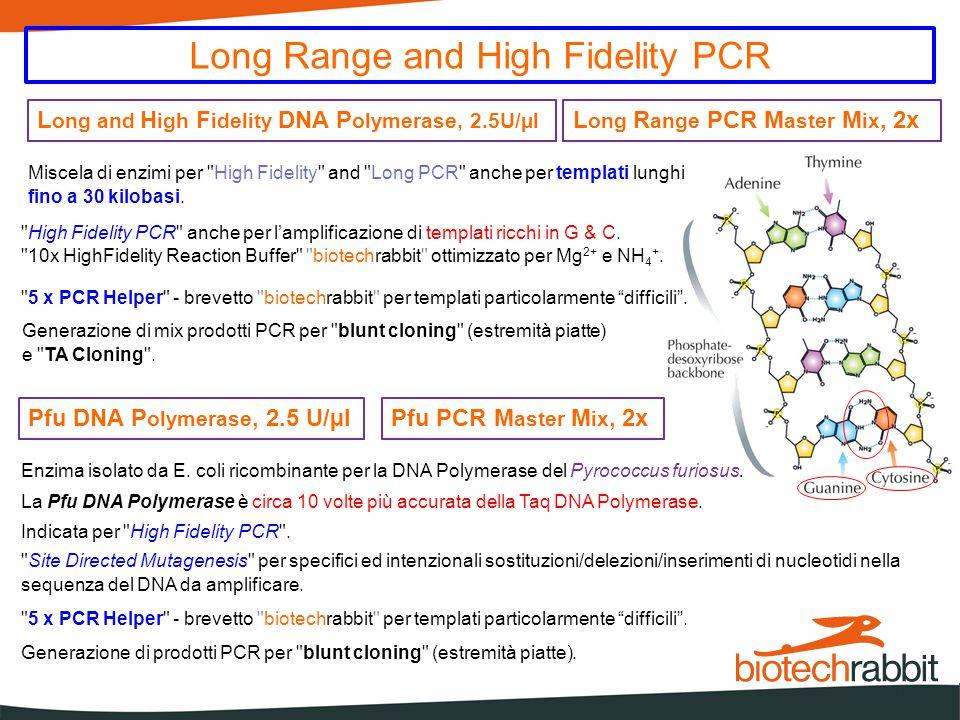 Enzimi speciali per amplificazioni di DNA non PCR phi29 DNA Polymerase, 10 U/mL É l'enzima responsabile della replicazione del virus fagico phi29 del Bacillus Subtilis.
