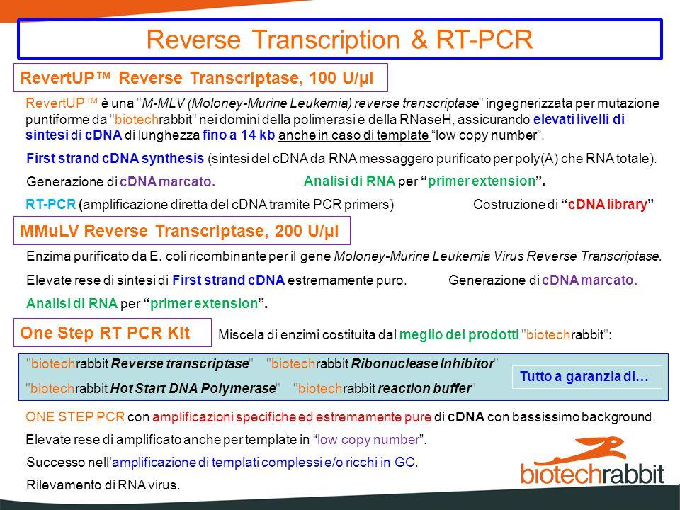 Prodotti Complementari DirectUP™ PCR Kit DirectUP™ PCR Kit, contiene un'enzima ingegnerizzato di Taq DNA polymerase del Thermus aquaticusYT-1 di brevetto biotechrabbit , atto a garantire ottimi risultati senza necessità di purificazione del templato - tollera fino al 40 % sangue intero Le mutazioni introdotte nella sequenza genica della polimerasi forniscono una efficace funzione Hot Start - insensibile agli inibitori contenuti nel suolo - insensibile agli inibitori contenuti negli alimenti, ai coloranti alimentari ed agli intercalanti Sono state eliminate entrambe le attività 5 → 3 e 3 → 5 attività exonuclease É mantenuta l'attività deoxynucleotidyl transferase che consiste nell'aggiunta di un extra A overhang all'estremita 3' dei prodotti PCR, permettendo un facile clonaggio in vettori con T overhangs RNase Inhibitor, 40 U/µl Brevetto biotechrabbit Attivo nell'ambito di svariate reazioni che prevedono l'utilizzo di RNA senza alcuna interferenza.