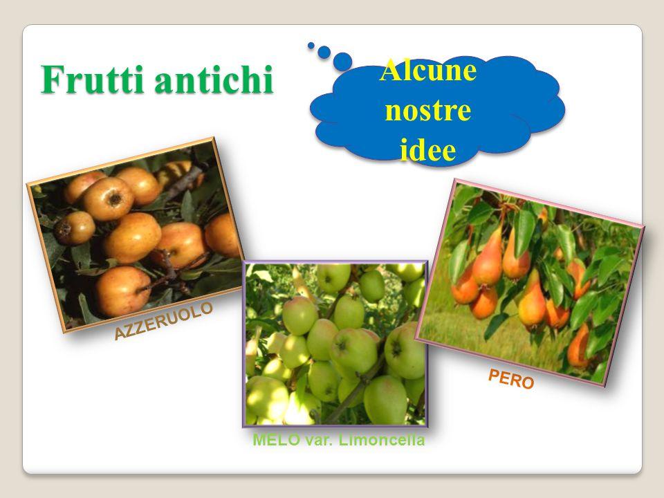 Frutti antichi AZZERUOLO PERO MELO var. Limoncella Alcune nostre idee