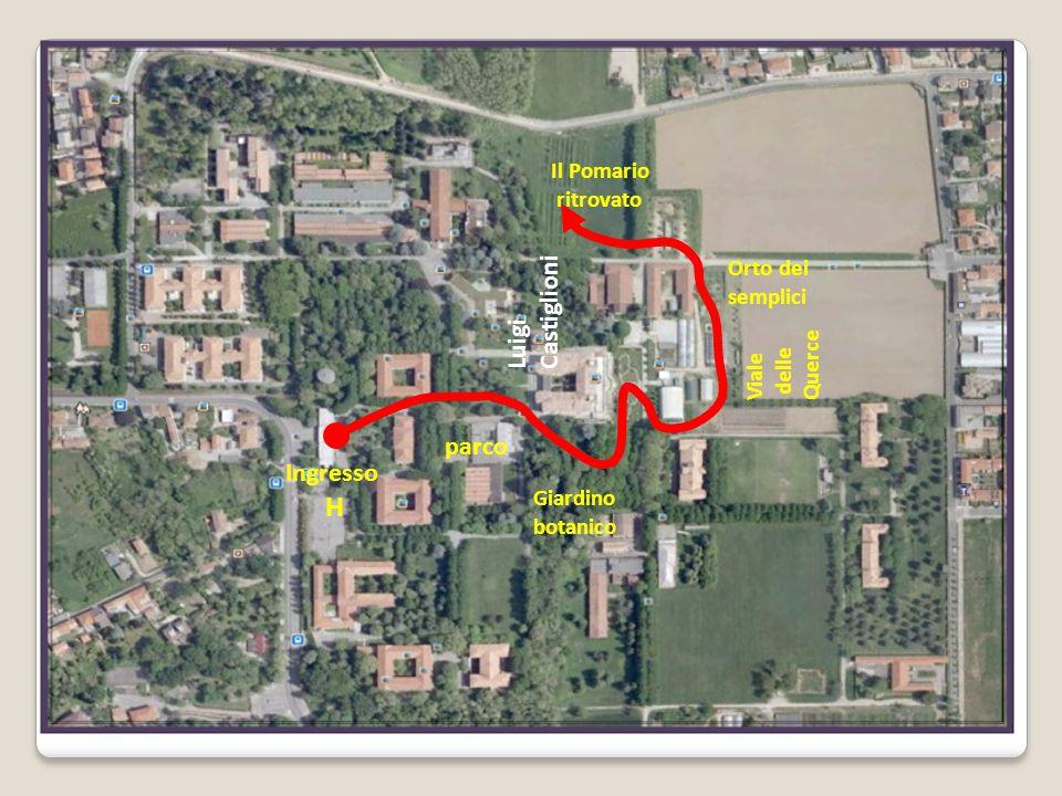 Ingresso H parco Giardino botanico Orto dei semplici Viale delle Querce Il Pomario ritrovato Luigi Castiglioni