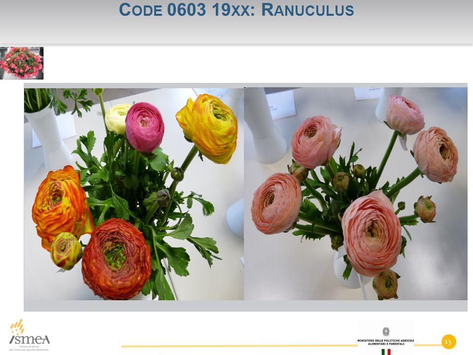 C ODE 0603 19 XX : R ANUCULUS 13