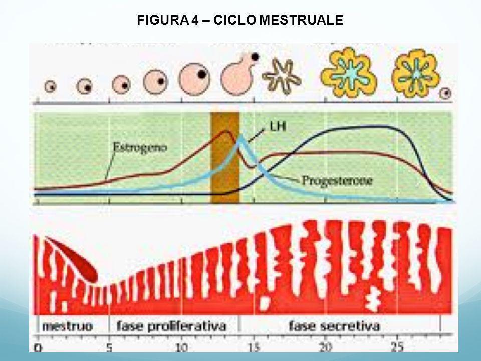 FIGURA 5a – ENDOMETRIOSI ASPETTO MACROSCOPICO ANTERO-POSTERIORE