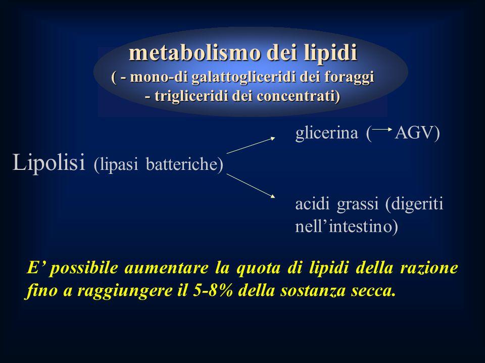 metabolismo dei lipidi ( - mono-di galattogliceridi dei foraggi - trigliceridi dei concentrati) E' possibile aumentare la quota di lipidi della razione fino a raggiungere il 5-8% della sostanza secca.