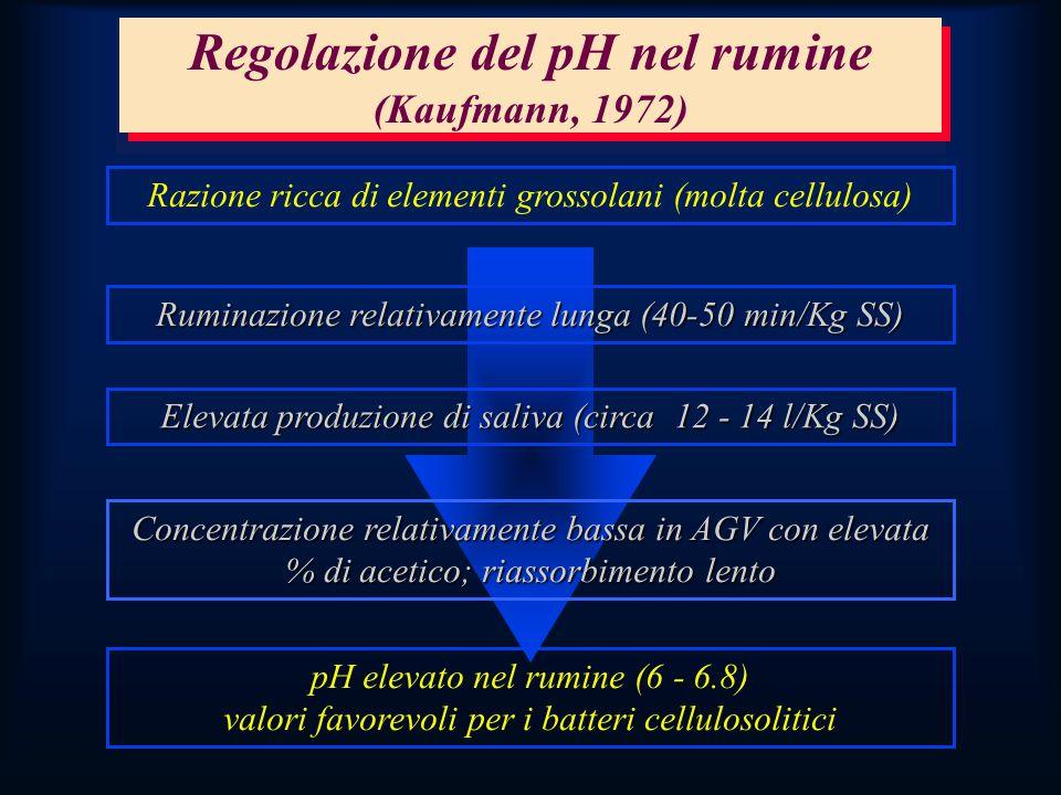 Regolazione del pH nel rumine (Kaufmann, 1972) Razione ricca di elementi grossolani (molta cellulosa) Ruminazione relativamente lunga (40-50 min/Kg SS) Elevata produzione di saliva (circa 12 - 14 l/Kg SS) Concentrazione relativamente bassa in AGV con elevata % di acetico; riassorbimento lento pH elevato nel rumine (6 - 6.8) valori favorevoli per i batteri cellulosolitici