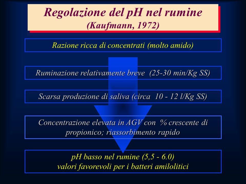 Regolazione del pH nel rumine (Kaufmann, 1972) Razione ricca di concentrati (molto amido) Ruminazione relativamente breve (25-30 min/Kg SS) Scarsa produzione di saliva (circa 10 - 12 l/Kg SS) Concentrazione elevata in AGV con % crescente di propionico; riassorbimento rapido pH basso nel rumine (5,5 - 6.0) valori favorevoli per i batteri amilolitici