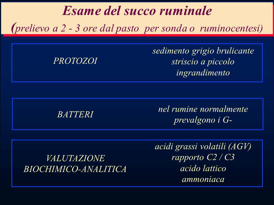 Esame del succo ruminale ( prelievo a 2 - 3 ore dal pasto per sonda o ruminocentesi) PROTOZOI sedimento grigio brulicante striscio a piccolo ingrandimento BATTERI nel rumine normalmente prevalgono i G- VALUTAZIONE BIOCHIMICO-ANALITICA acidi grassi volatili (AGV) rapporto C2 / C3 acido lattico ammoniaca