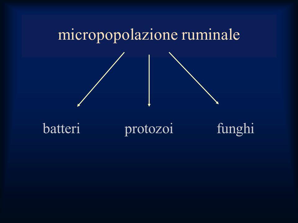 micropopolazione ruminale batteri protozoifunghi