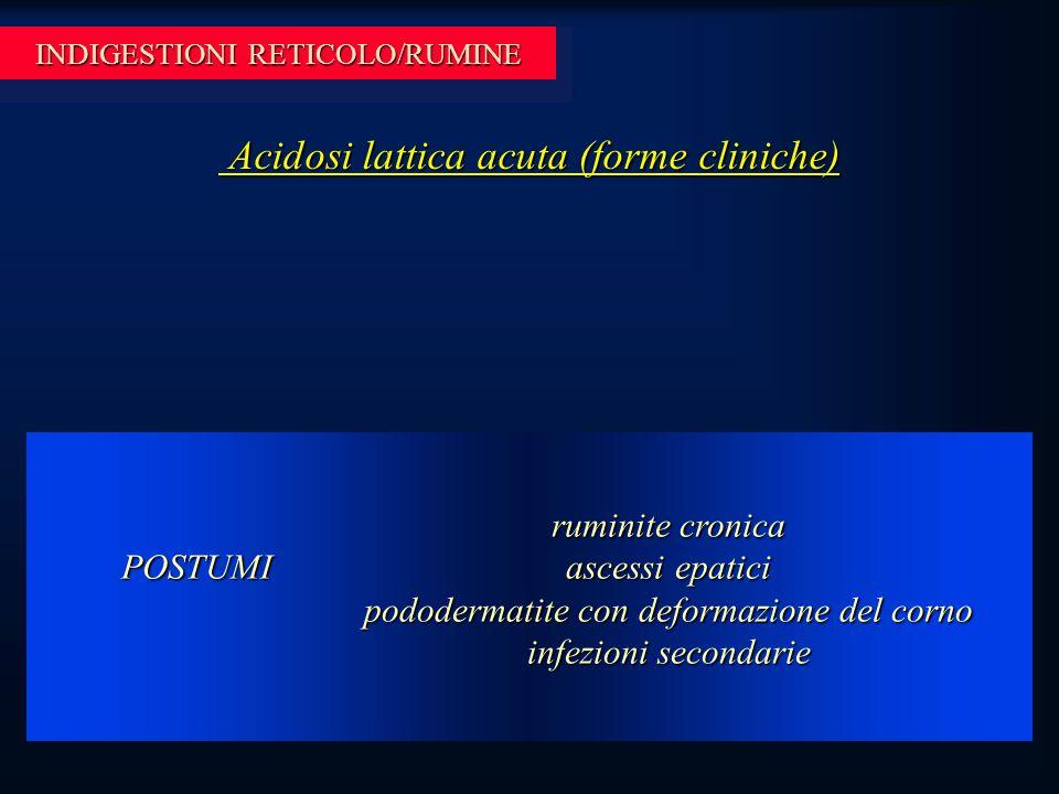 INDIGESTIONI RETICOLO/RUMINE Acidosi lattica acuta (forme cliniche) Acidosi lattica acuta (forme cliniche) ruminite cronica ascessi epatici pododermatite con deformazione del corno infezioni secondarie POSTUMI