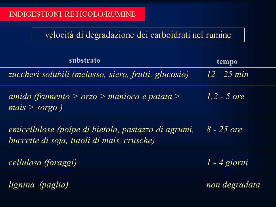 INDIGESTIONI RETICOLO/RUMINE zuccheri solubili (melasso, siero, frutti, glucosio) amido (frumento > orzo > manioca e patata > mais > sorgo ) emicellulose (polpe di bietola, pastazzo di agrumi, buccette di soja, tutoli di mais, crusche) cellulosa (foraggi) lignina (paglia) velocità di degradazione dei carboidrati nel rumine substrato tempo 12 - 25 min 1,2 - 5 ore 8 - 25 ore 1 - 4 giorni non degradata