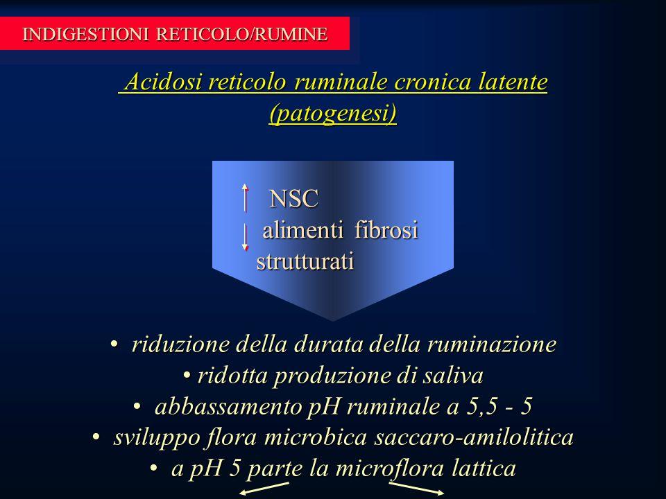 INDIGESTIONI RETICOLO/RUMINE Acidosi reticolo ruminale cronica latente (patogenesi) Acidosi reticolo ruminale cronica latente (patogenesi) riduzione della durata della ruminazione riduzione della durata della ruminazione ridotta produzione di saliva ridotta produzione di saliva abbassamento pH ruminale a 5,5 - 5 abbassamento pH ruminale a 5,5 - 5 sviluppo flora microbica saccaro-amilolitica sviluppo flora microbica saccaro-amilolitica a pH 5 parte la microflora lattica a pH 5 parte la microflora lattica NSC NSC alimenti fibrosi strutturati alimenti fibrosi strutturati