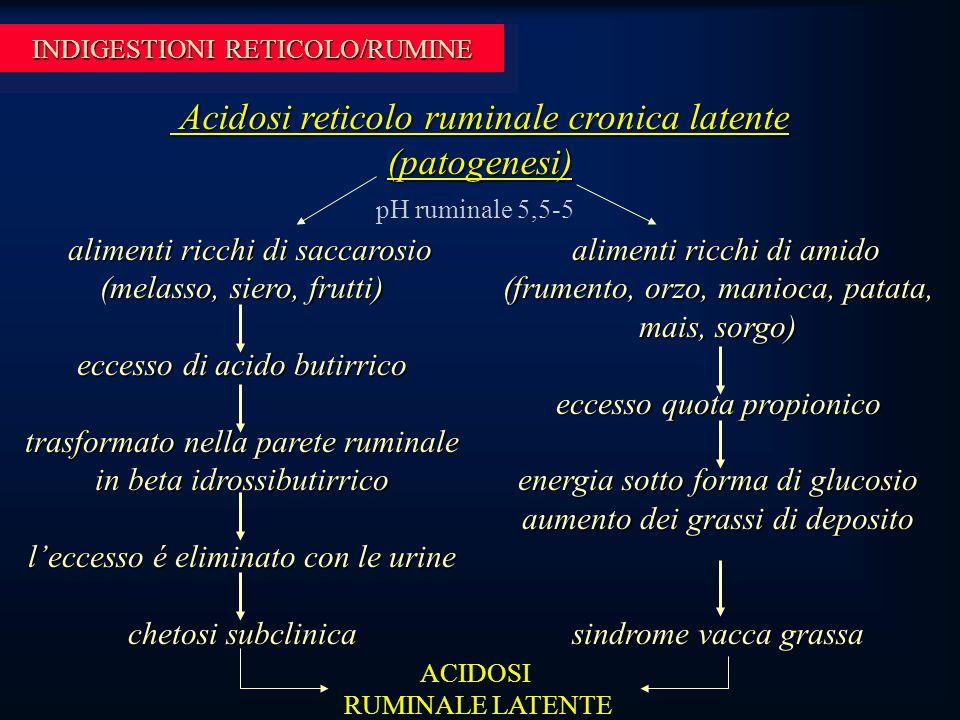 INDIGESTIONI RETICOLO/RUMINE Acidosi reticolo ruminale cronica latente (patogenesi) Acidosi reticolo ruminale cronica latente (patogenesi) pH ruminale 5,5-5 alimenti ricchi di saccarosio (melasso, siero, frutti) alimenti ricchi di saccarosio (melasso, siero, frutti) eccesso di acido butirrico trasformato nella parete ruminale in beta idrossibutirrico l'eccesso é eliminato con le urine chetosi subclinica alimenti ricchi di amido (frumento, orzo, manioca, patata, mais, sorgo) alimenti ricchi di amido (frumento, orzo, manioca, patata, mais, sorgo) eccesso quota propionico energia sotto forma di glucosio aumento dei grassi di deposito sindrome vacca grassa ACIDOSI RUMINALE LATENTE