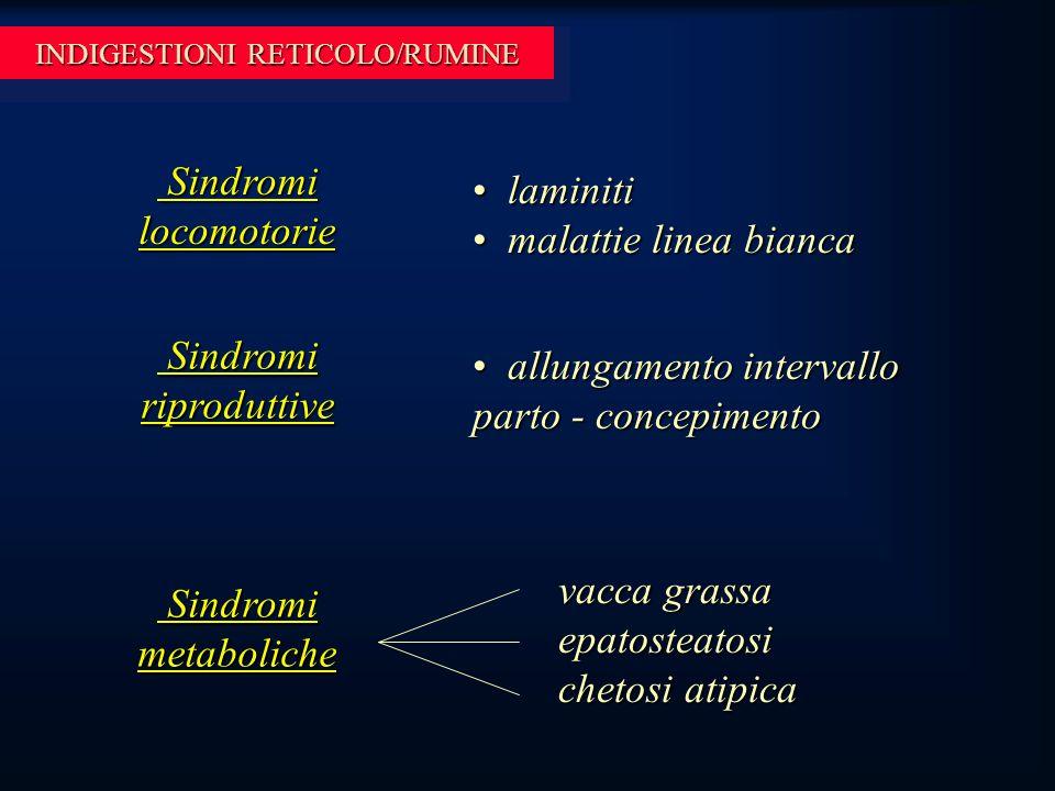 INDIGESTIONI RETICOLO/RUMINE Sindromi locomotorie Sindromi locomotorie laminiti laminiti malattie linea bianca malattie linea bianca Sindromi riproduttive Sindromi riproduttive Sindromi metaboliche Sindromi metaboliche allungamento intervallo parto - concepimento allungamento intervallo parto - concepimento vacca grassa epatosteatosi chetosi atipica