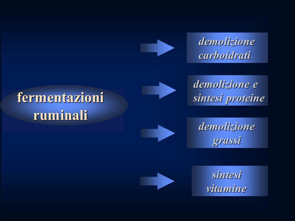 fermentazioni ruminali demolizione demolizione carboidrati carboidrati demolizione e demolizione e sintesi proteine sintesi proteine demolizione demolizione grassi grassi sintesi sintesi vitamine vitamine