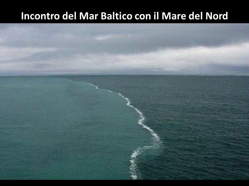 Due volte all'anno in Messico si assiste a questa migrazione. Ogni volta 10.000 individui di questa specie nuotano dallo Yucatan alla Florida in prima