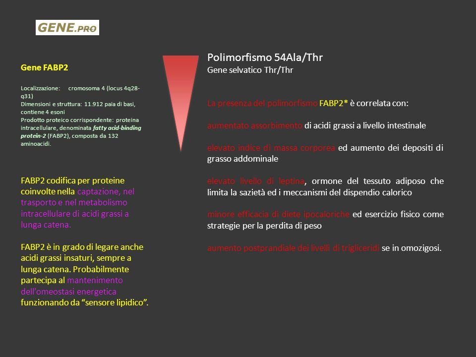 Gene FABP2 Localizzazione:cromosoma 4 (locus 4q28- q31) Dimensioni e struttura: 11.912 paia di basi, contiene 4 esoni Prodotto proteico corrispondente