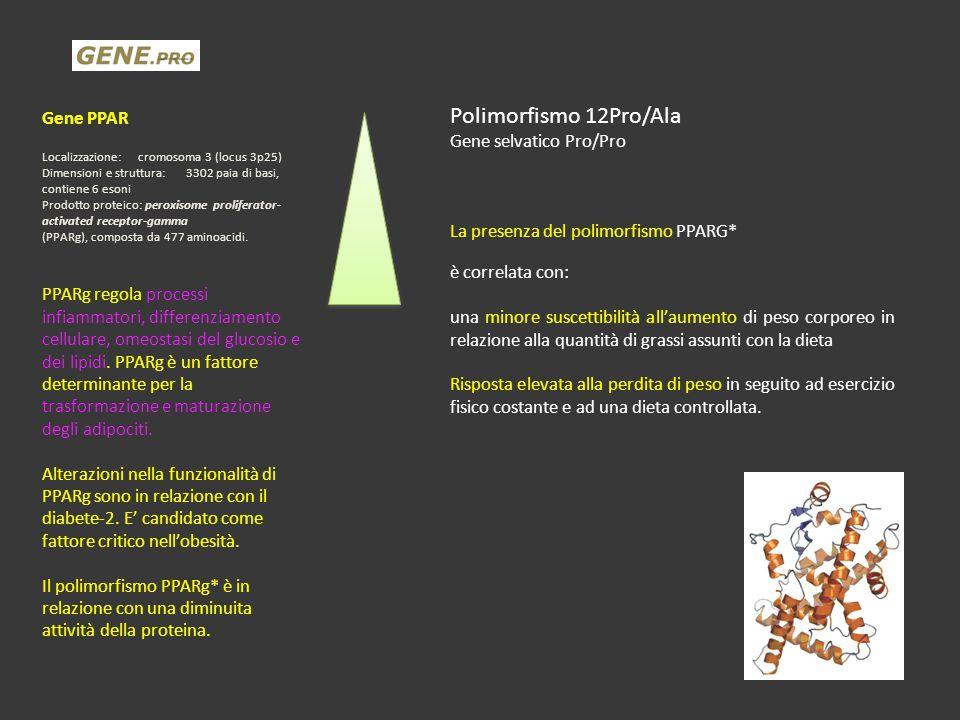 Gene PPAR Localizzazione:cromosoma 3 (locus 3p25) Dimensioni e struttura:3302 paia di basi, contiene 6 esoni Prodotto proteico: peroxisome proliferato