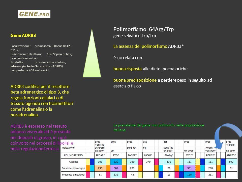 Polimorfismo 64Arg/Trp gene selvatico Trp/Trp La assenza del polimorfismo ADRB3* è correlata con: buona risposta alle diete ipocoaloriche buona predis
