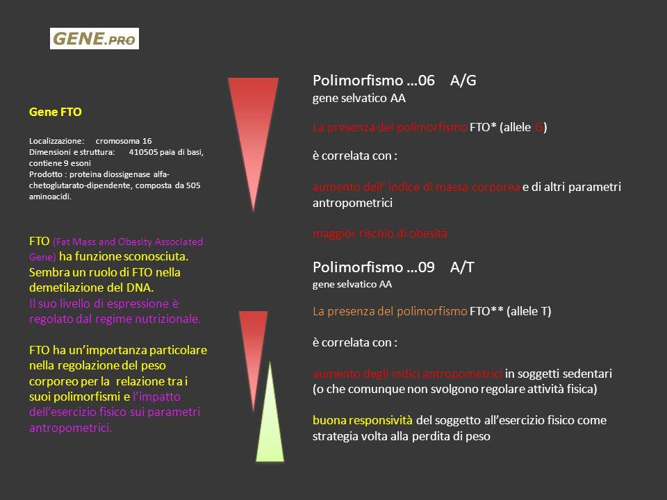 Gene FTO Localizzazione:cromosoma 16 Dimensioni e struttura:410505 paia di basi, contiene 9 esoni Prodotto : proteina diossigenase alfa- chetoglutarat