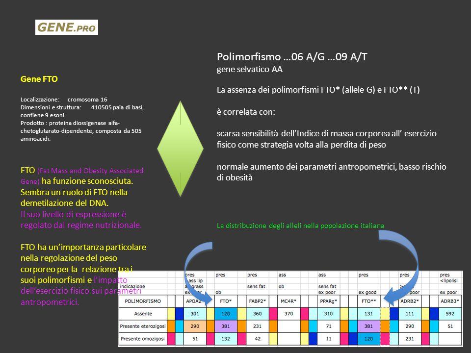 Polimorfismo …06 A/G …09 A/T gene selvatico AA La assenza dei polimorfismi FTO* (allele G) e FTO** (T) è correlata con: scarsa sensibilità dell'Indice