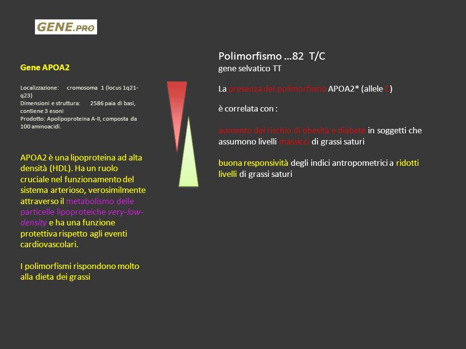 Gene APOA2 Localizzazione:cromosoma 1 (locus 1q21- q23) Dimensioni e struttura:2586 paia di basi, contiene 3 esoni Prodotto: Apolipoproteina A-II, com